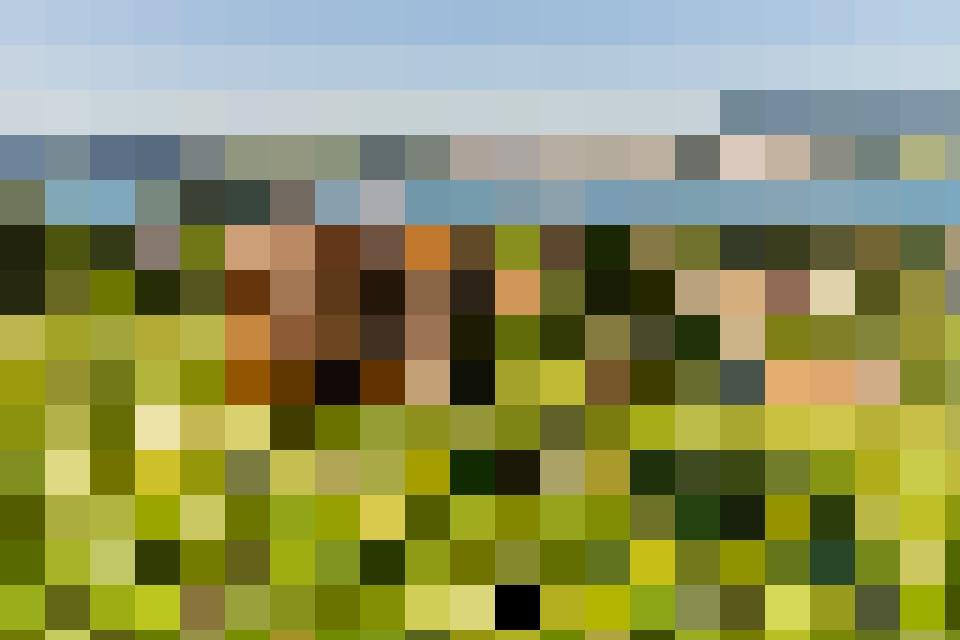 Für die grossartige Aussicht haben die Kühe keinen Sinn, das frische Gras interessiert sie bedeutend mehr.