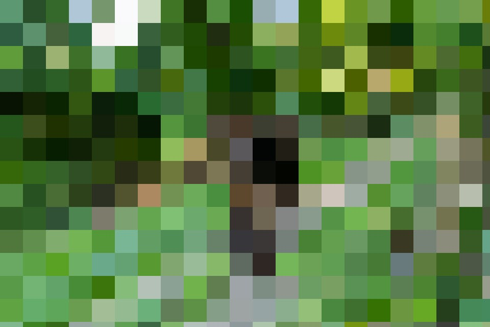 Wenn die Kühe auf der Weide sind, finden sie am Waldrand Schatten.