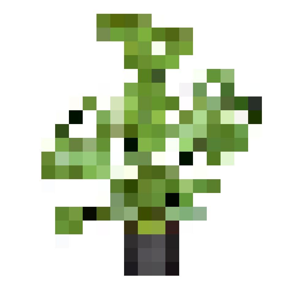 Go green! Fensterblatt (Monstera deliciosa), Topfgrösse Ø 17cm, Fr. 15.95, bei