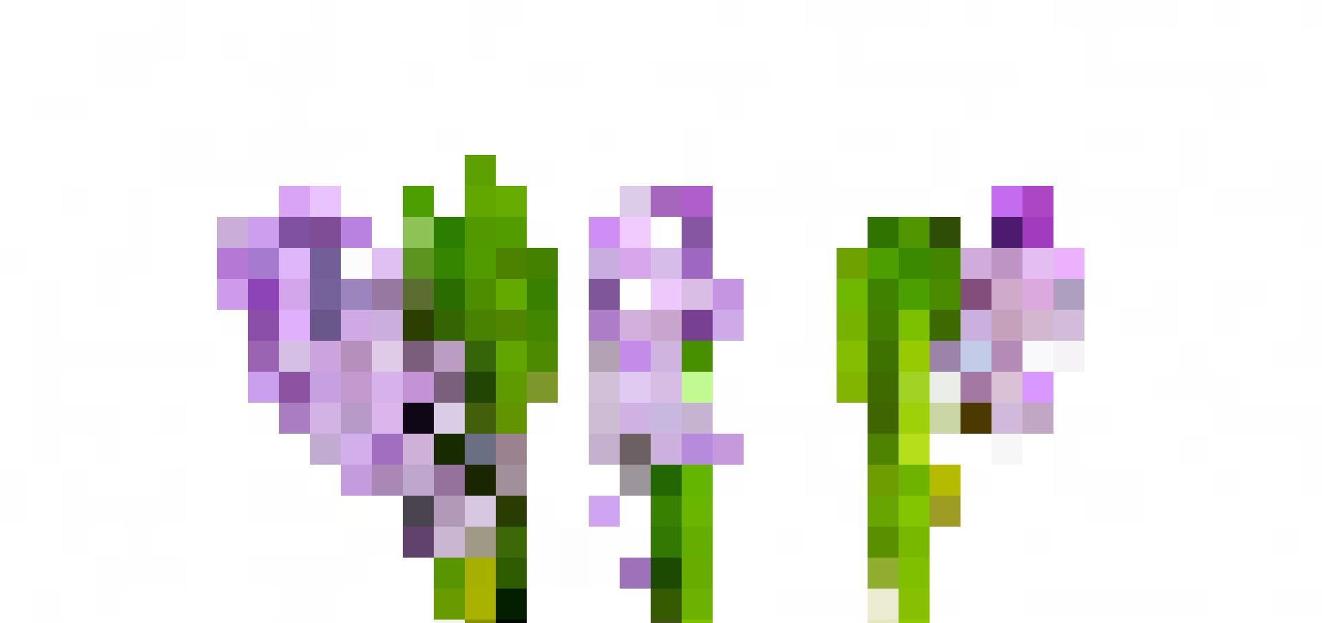 Une fleur pour s'exclamer «vive l'amitié et la gaieté!»