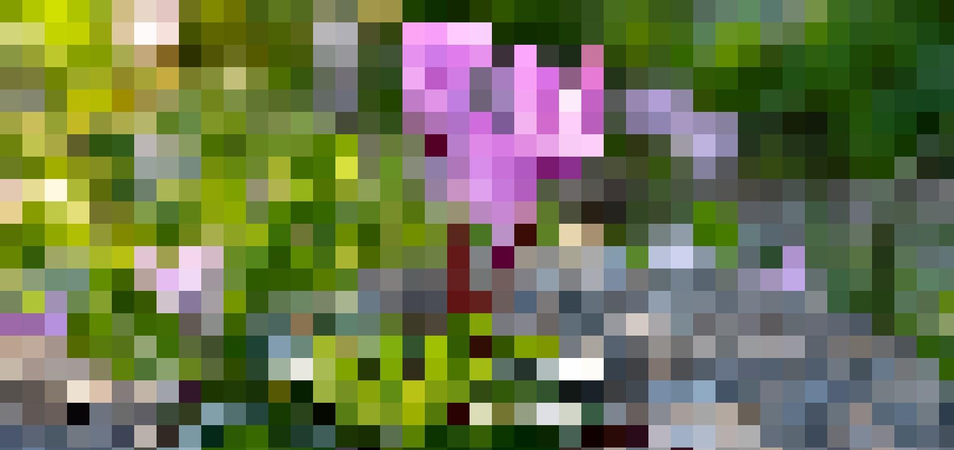 Dans l'Antiquité, il était de bon augure de l'offrir pour l'arrivée d'un bébé. Le cyclamen est une plante que l'on ne destine pas habituellement à l'être aimé, car il exprime l'insécurité.