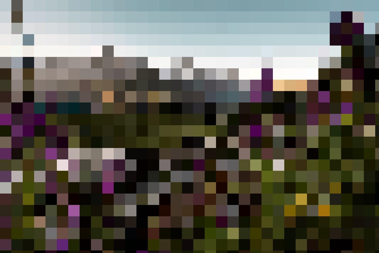 Der Alpengarten auf der Schynige Platte mit 700 Pflanzen wird von einem der faszinierendsten Blicke auf Eiger, Mönch und Jungfrau «garniert».