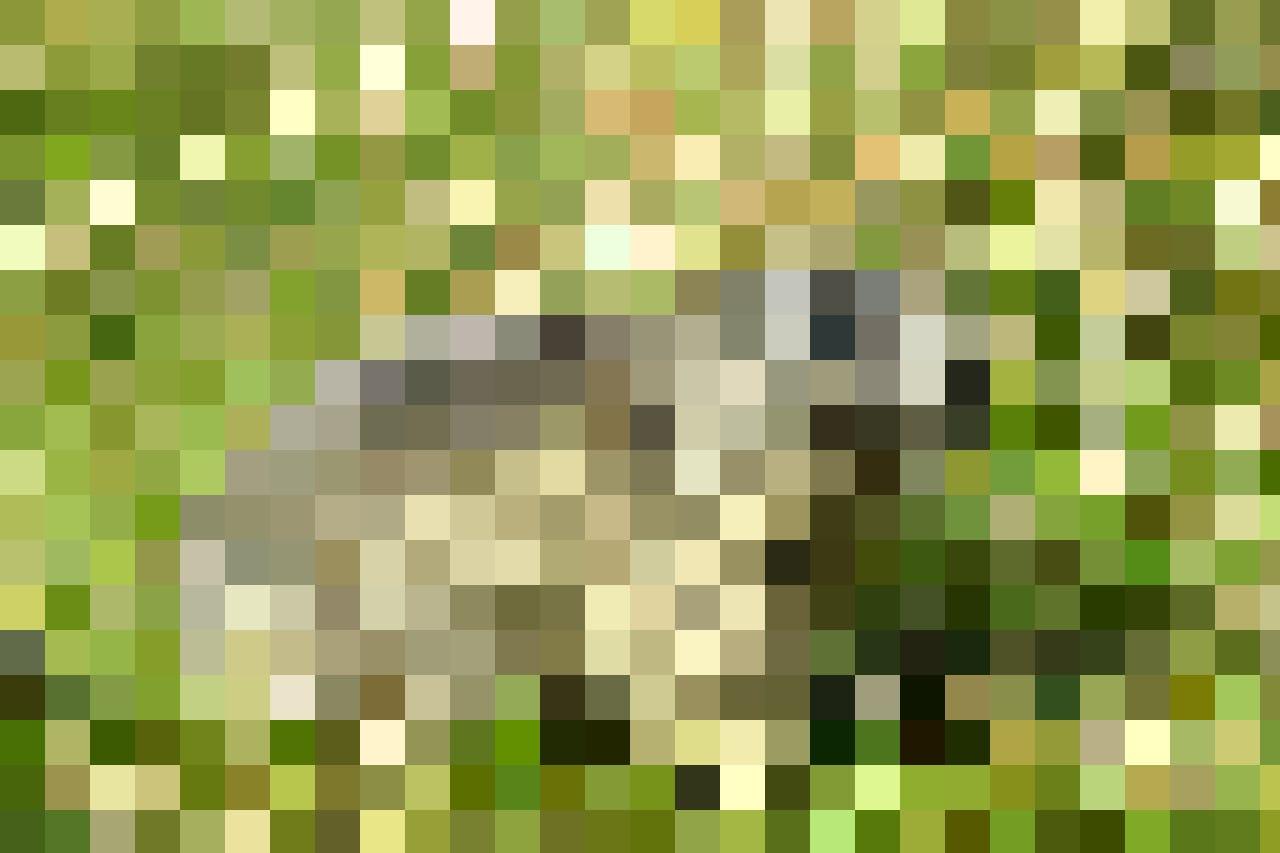 L'endroit est connu pour ses marmottes.