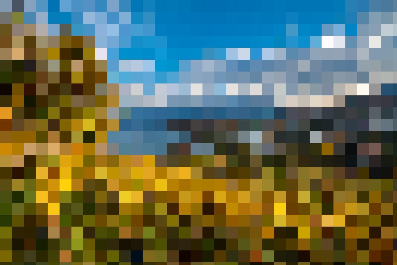 Lehrreich – Der Erlebnispfad durch den Spiezer Rebberg bringt auf 12 Tafeln die alpine Weinkultur näher.